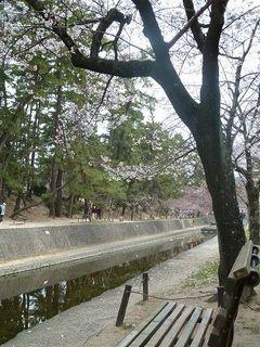 110403a_493_夙川東側沿道.jpg